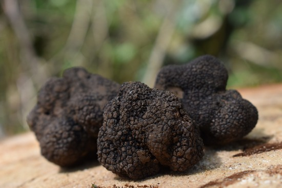 Week-end Truffes